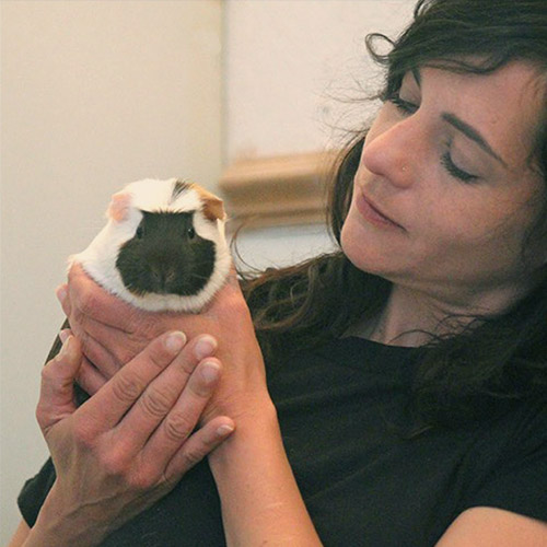 guinea pig services in watford busy bow wows pet care