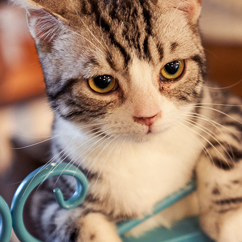 cat sitting services in watford busy bow wows pet care london